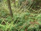 瑞安花岩国家森林